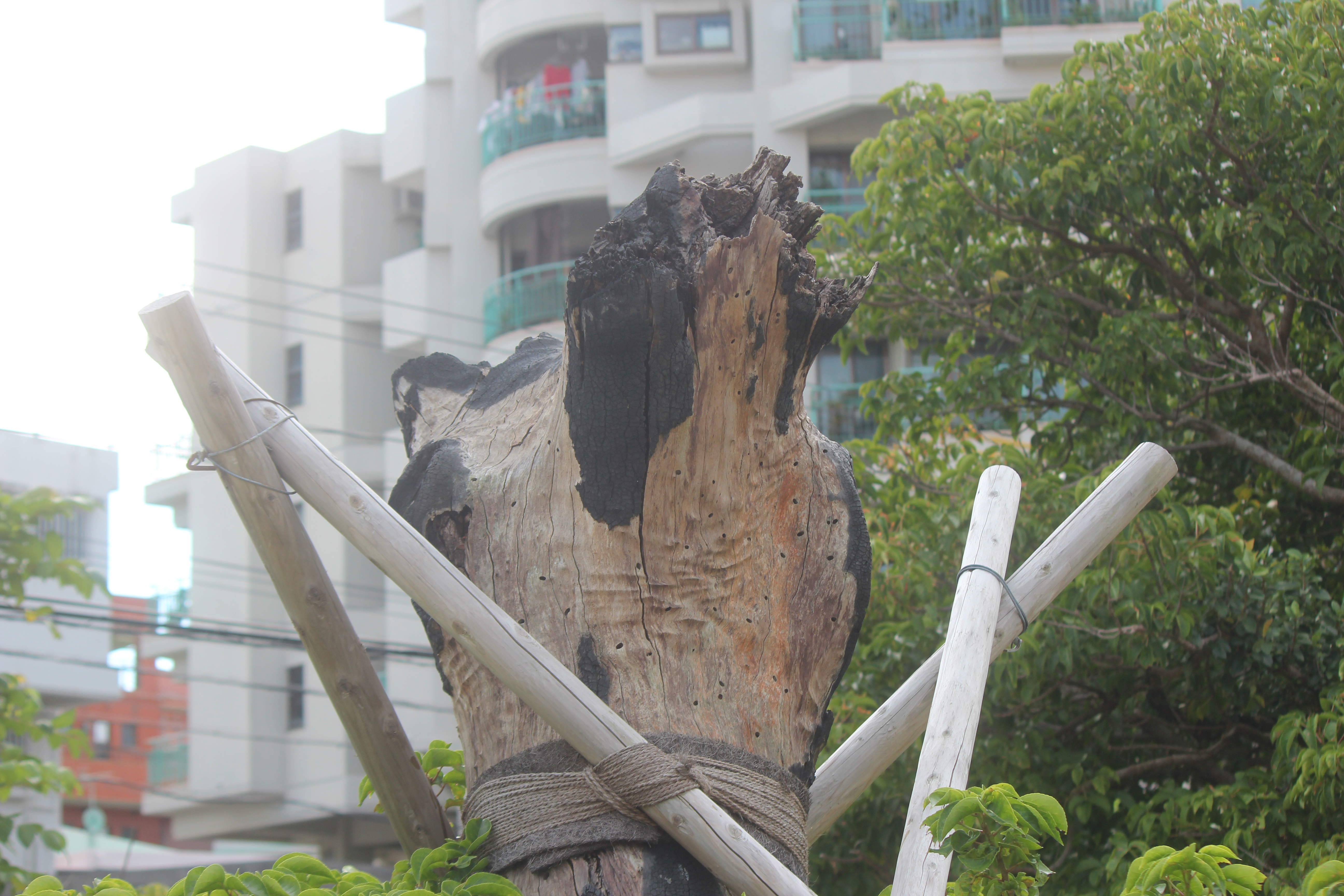 沖縄国際大学©田中將介
